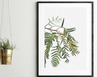 Australian native tree, Wall art, prints, photograph