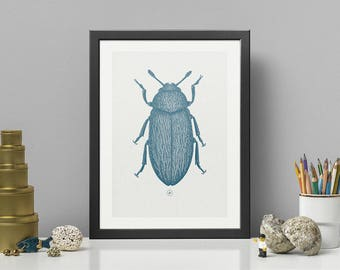 HAIRY BEETLE   Blue HQ Pigment Print on eco-friendly paper