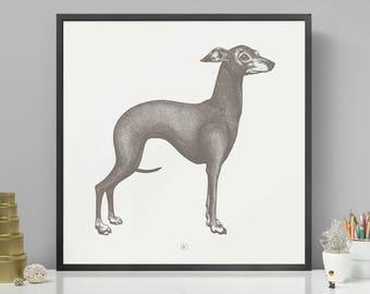 GREYHOUND   Grey Screen Print