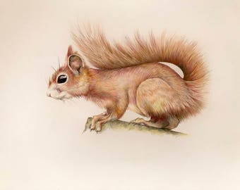 red squirrel coloured pencil drawing, original art, wall decor, gift for newborn