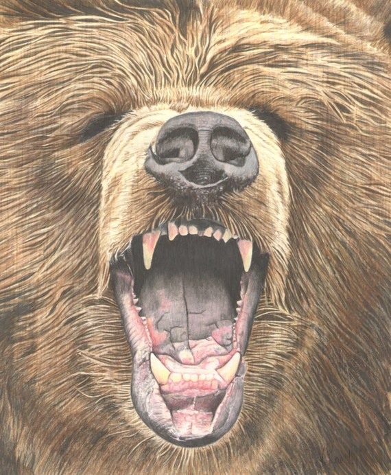 Growling Grizzly Bear Colored Pencil Drawing Illustrated ...  Growling Grizzl...