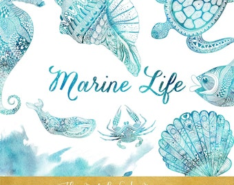 Marine Life Clipart Set - Animals, Shells & Watercolor - INSTANT DOWNLOAD - 11 .PNG Images