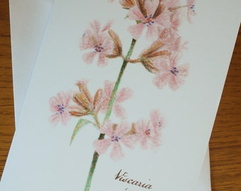 Viscaria Greetings Card (The Meaning of Flowers Collection)