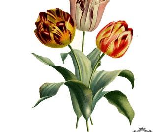 0035e3422 Three Vintage Tulips, floral Illustration tattoo, tulip tattoo, flower  tattoo, Body Art, Wickedly Lovely Skin Art Temporary tattoo