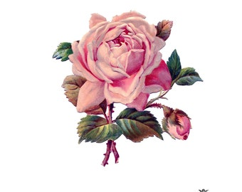 Pink Victorian Rose  Wickedly Lovely Skin Art Temporary Tattoo