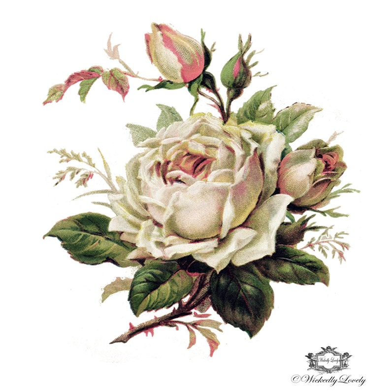 2084a4fef9cb8 Delicate palest pink rose, Vintage, floral tattoo, Body Art, Wickedly  Lovely Skin Art Temporary Tattoo