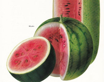 Watermelon melon Miyako vintage botanical art print sweet fruit food kitchen decor by Marilena Pistoia 8 x 11 1/4 inches