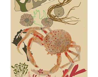 Naturama - Crab
