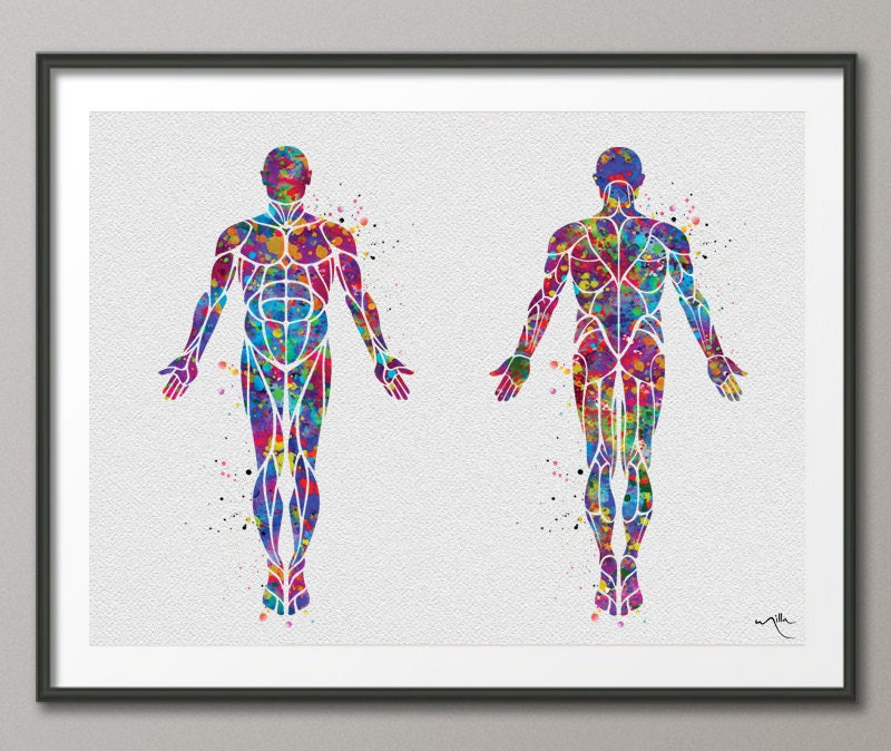 Muscular System Watercolor Print Human Body Anatomy Art Etsy