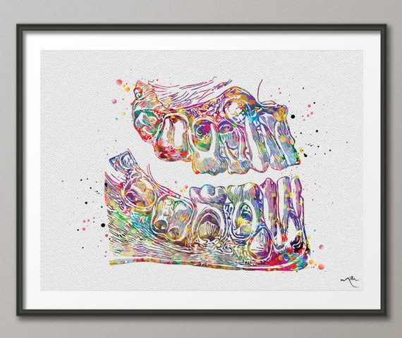 Zähne Anatomie Aquarell Druck Zahn anatomische Art Dental | Etsy