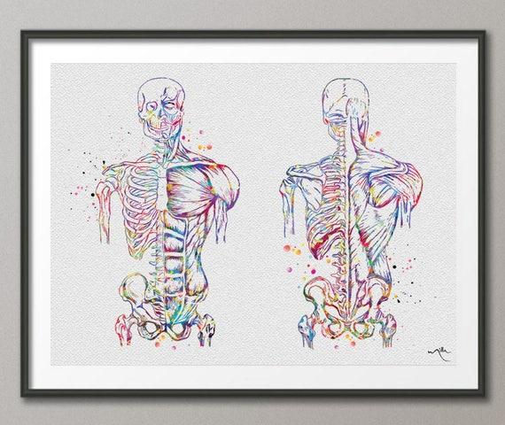 Muscular Art Watercolor Print Human Body Anatomy Art Medical Etsy