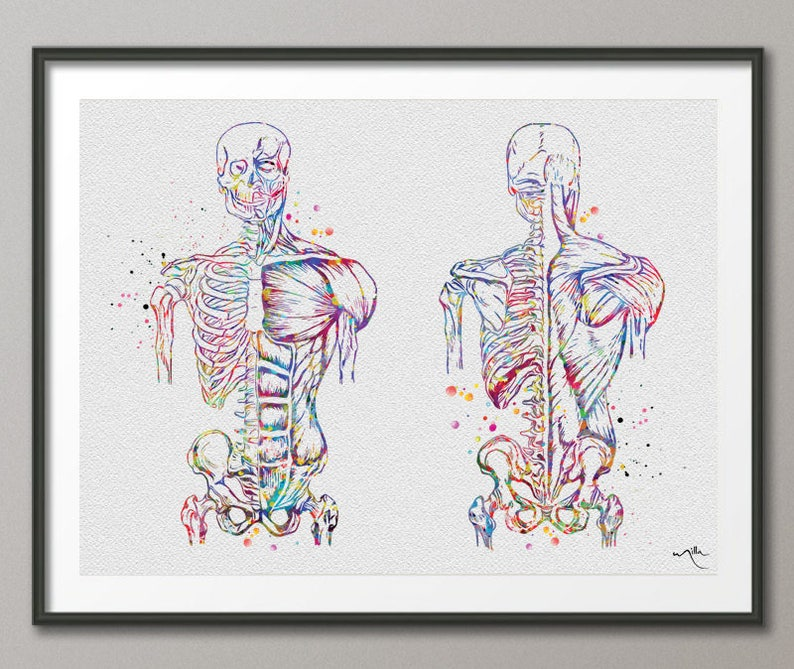 Muscular Art Watercolor Print Human Body Anatomy Art Medical Etsy