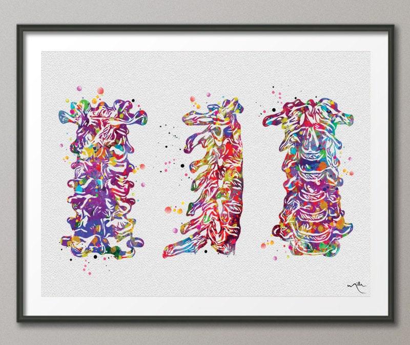 Cervical Spine Watercolor Print Anatomy Art Cervical Vertebrae | Etsy