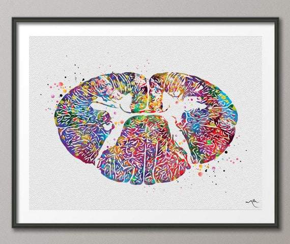 Brain with Spinal Cord Watercolor Art Print Medical Neurology Neurosurgeon Decor