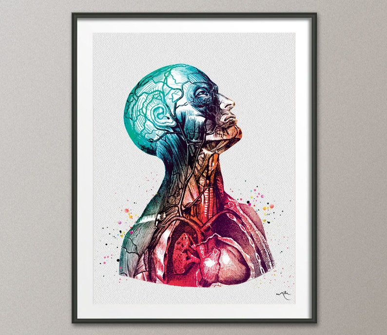 Anatomical Torso Watercolor Print Cardiology Decor Medical Art Etsy