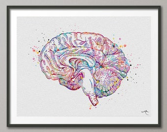 Section of brain etsy brain cross section anatomy watercolor print medical art science art anatomy neurology human brain nurse science poster psychological 1137 ccuart Images