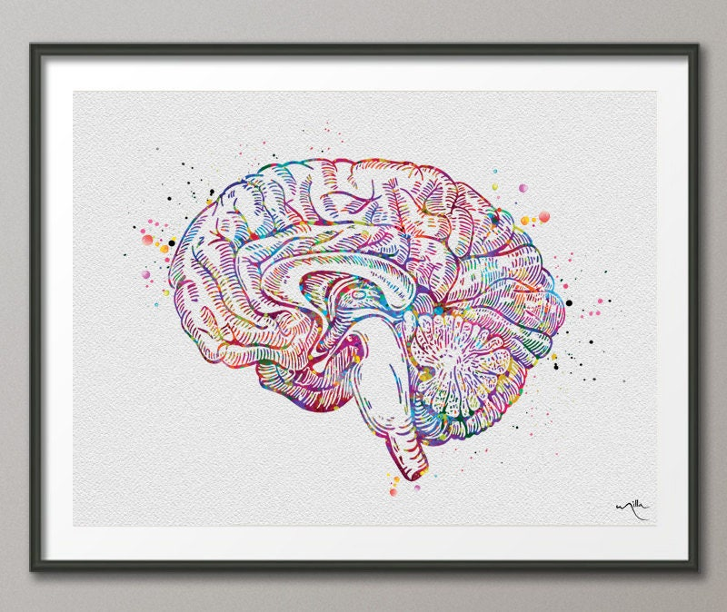 Brain Cross Section Anatomy Watercolor Print Medical Art Etsy