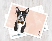 Cute Boston Terrier weari...