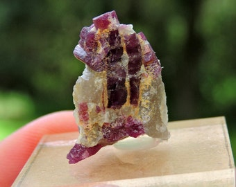 Rough Rubellite with acrylic display from Madagascar