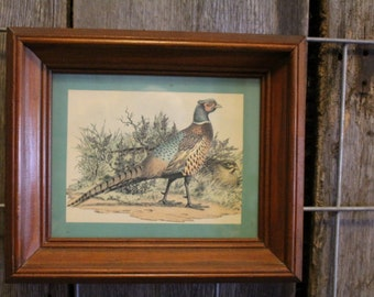 Beautiful Vintage Framed Pheasant Print