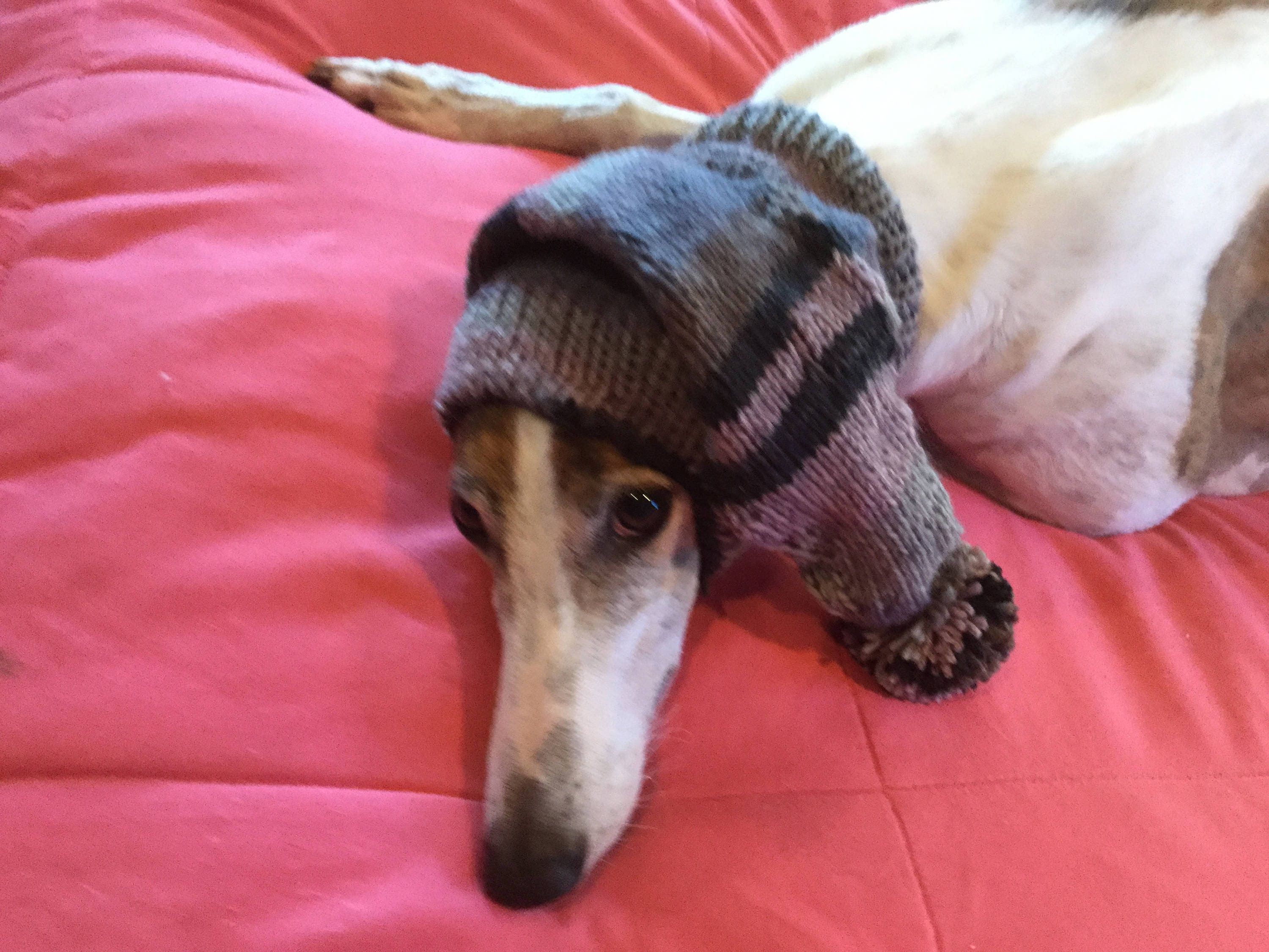 Pointed Hat with Snood for Greyhound - stripes in Black Heathers