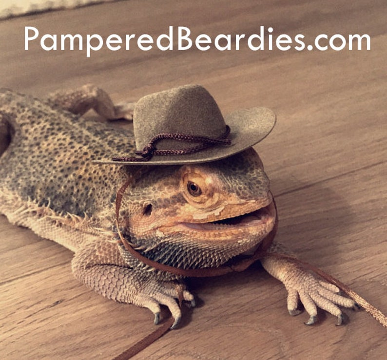 fbfa45896dd Cowboy Hats for your Bearded Dragon Snakes   Small Pets