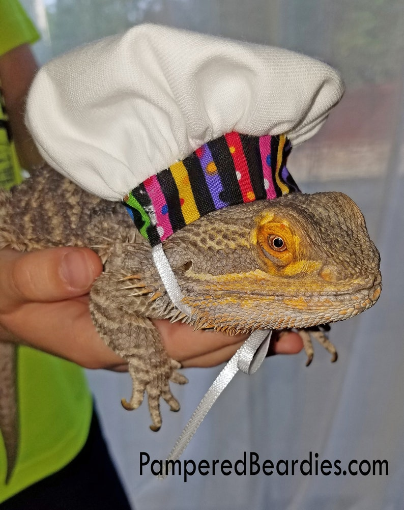 98765537794 Chef Hat for Bearded Dragons Reptiles and Small Animals