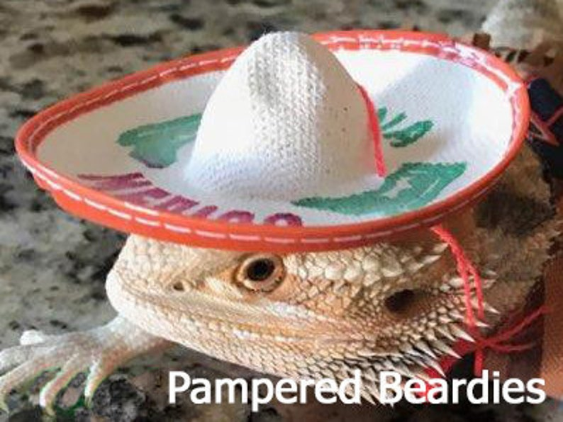 14143a2f026 Sombreros for your Bearded Dragon Snakes   Small Pets