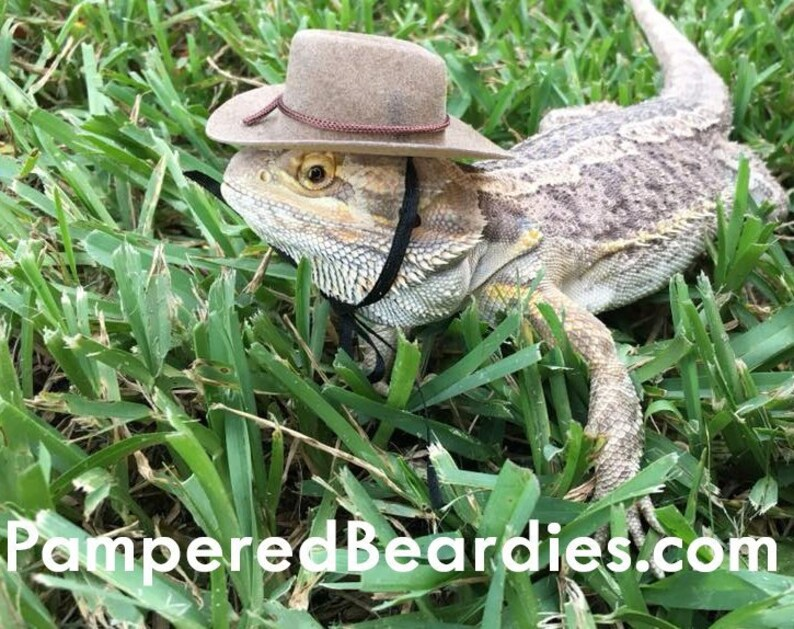 f68ce14d86c Cowboy Hats for your Bearded Dragon Snakes   Small Pets
