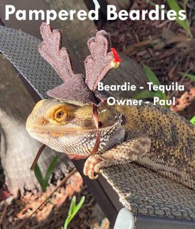 9ef8d8235e8 Reindeer Antlers for Bearded Dragons Snakes Reptilesand