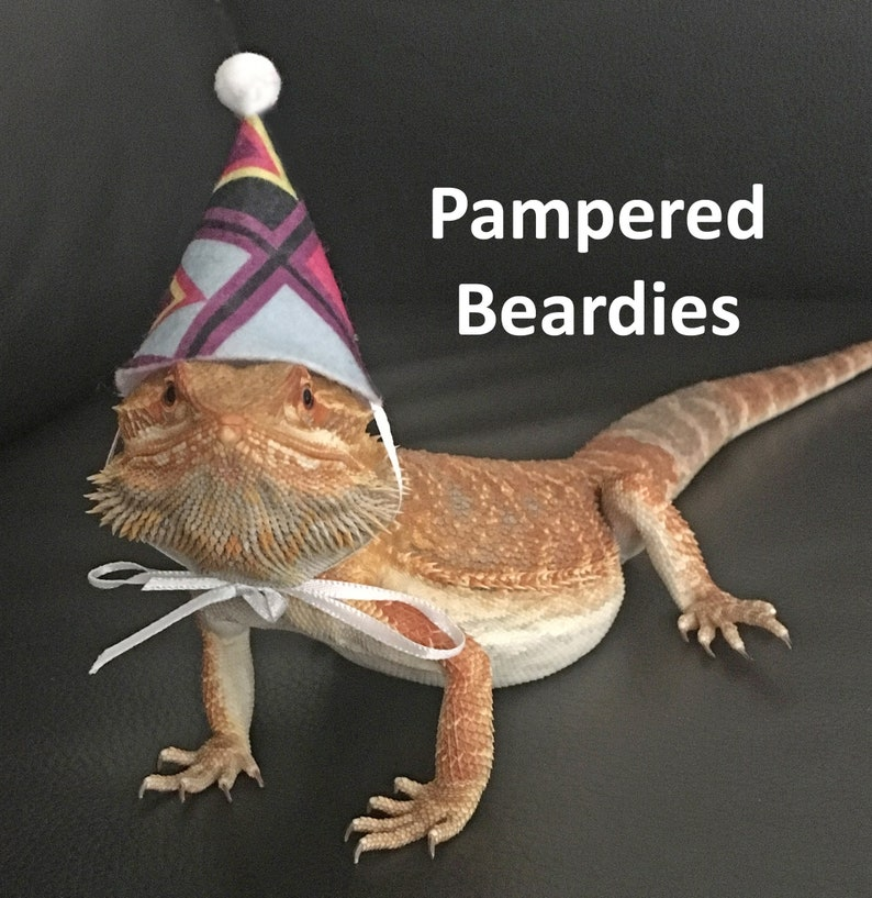 1aa0e72d659 Party Hats Multiple Sizes New Prints for Bearded Dragons