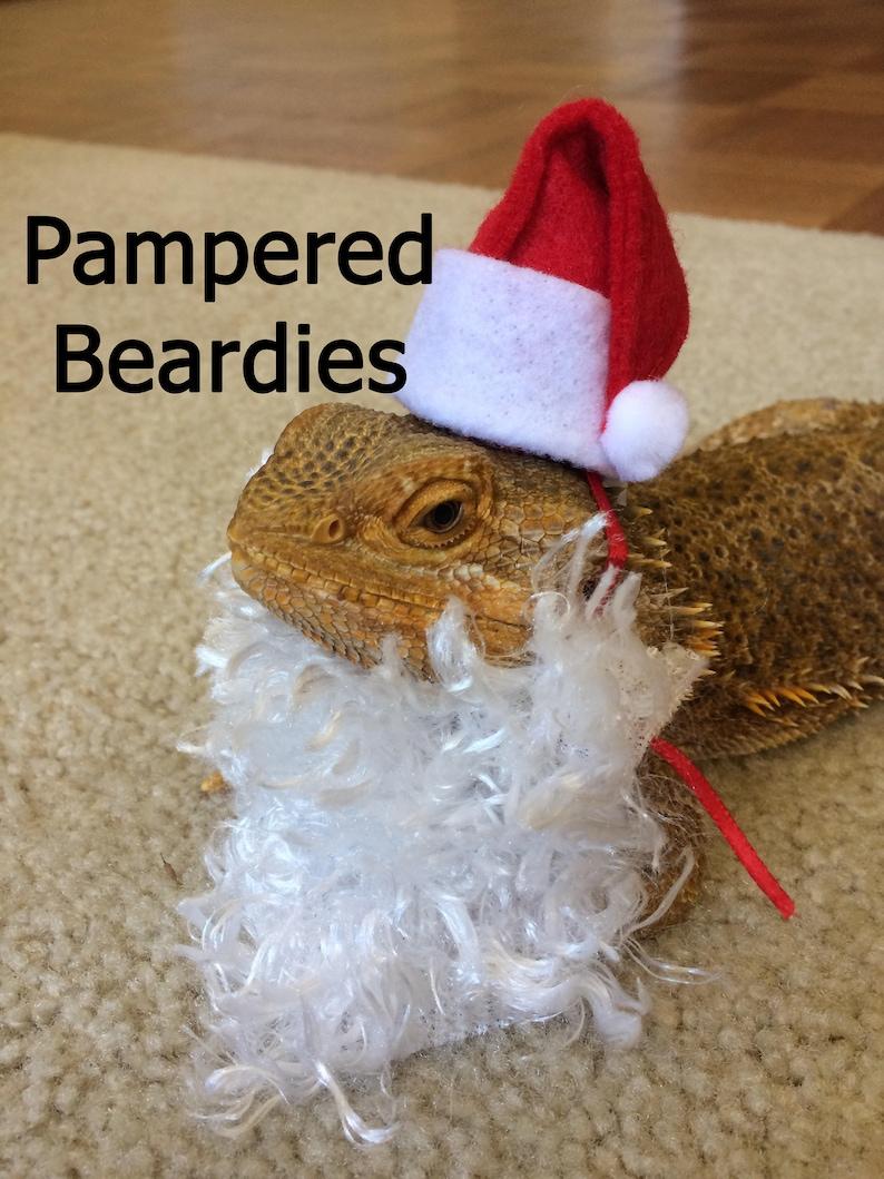 82f23fdf1f0 Santa Hat and Santa Beard Costume for Bearded Dragons