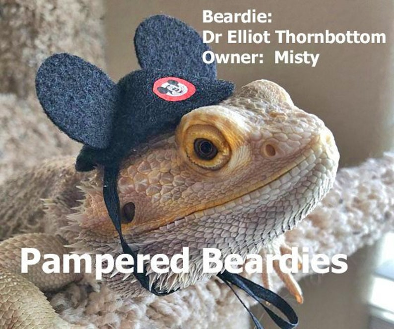 2a697acd0be Mouse Ears for your Bearded Dragon Reptile and Small Animals