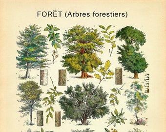 Vintage French Tree Poster - Botanical Print - Tree Print - Wall Art Home Decor Fine Art Gift Ideas #vi731