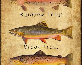 f1057edef654 Trout Poster - Fish Print - Rainbow Brook Brown - Rainbow Trout - Fishing  Poster Wall Art Decor Man Cave  vi248