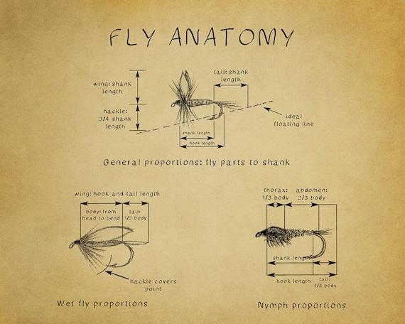 Fliegen Fischen Poster Diagramm Fliegenfischen-Druck | Etsy
