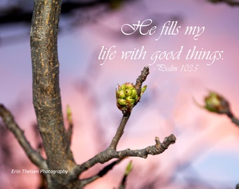 Spring Buds on Fruit Tree with Psalm 103:5 He fills my life with good things.  Fine Art Scenic Photography and custom home decor.