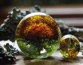 Moss Gauges, Nature Ear Plugs Lichen Terrarium Piercing, Magic Resin Ear Plugs, Fairy Gauges, Real Plant Organic Gauges, Wood Resin Piercing