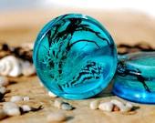 Blue Ocean Sea Shell and Algae Ear Gauges Water Mermaid Ear Plugs Nautical Marine Stretchers Summer Beach Tunnels Nature Terrarium Tappers