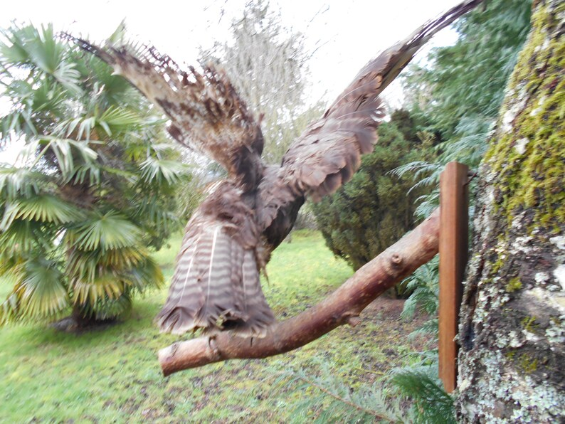 Vintage French Mounted Bird Open Wings