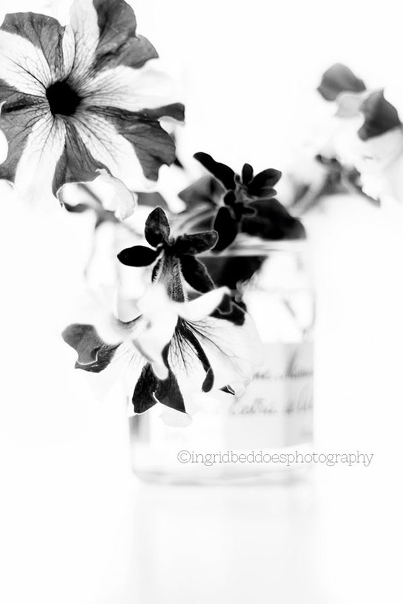 Black And White Flower Photography Still Life Petunias