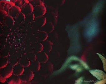 Flower print, dahlia wall art, dahlia print, dark red flower photography, floral wall art, moody, whimsical, home decor, bedroom wall decor
