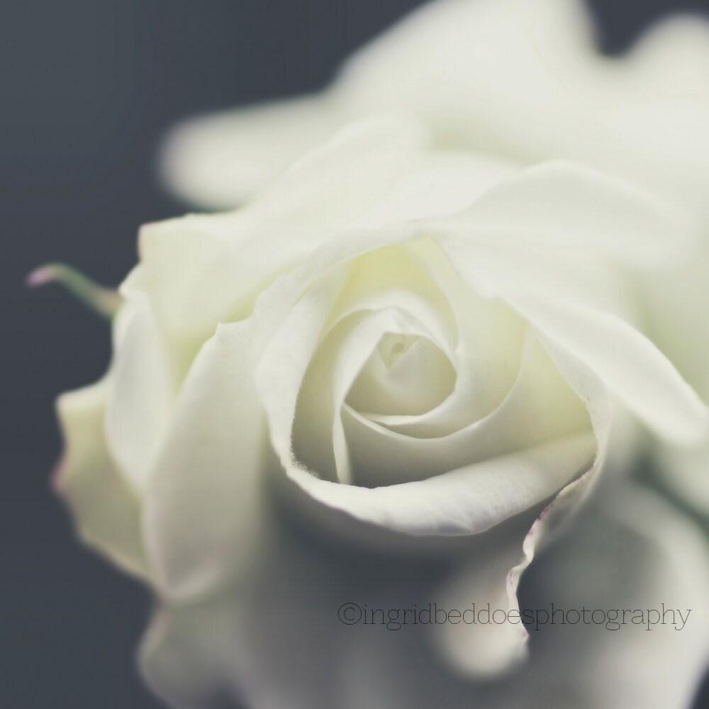 Rose Photography White Flower Photo Dreamy White Rose Print Etsy