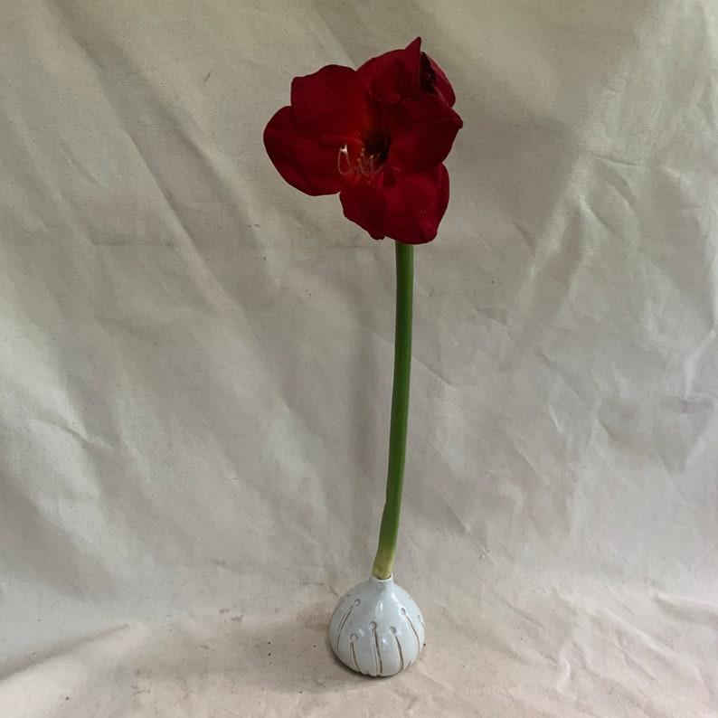 Amaryllis Bulb Vase