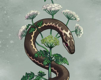 Hemlock's Healing - Herbal and Animal Lore Art Print