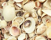 Seashell Assorted Mixed Lot Tiny Small and Medium Natural Shells 1 Cup