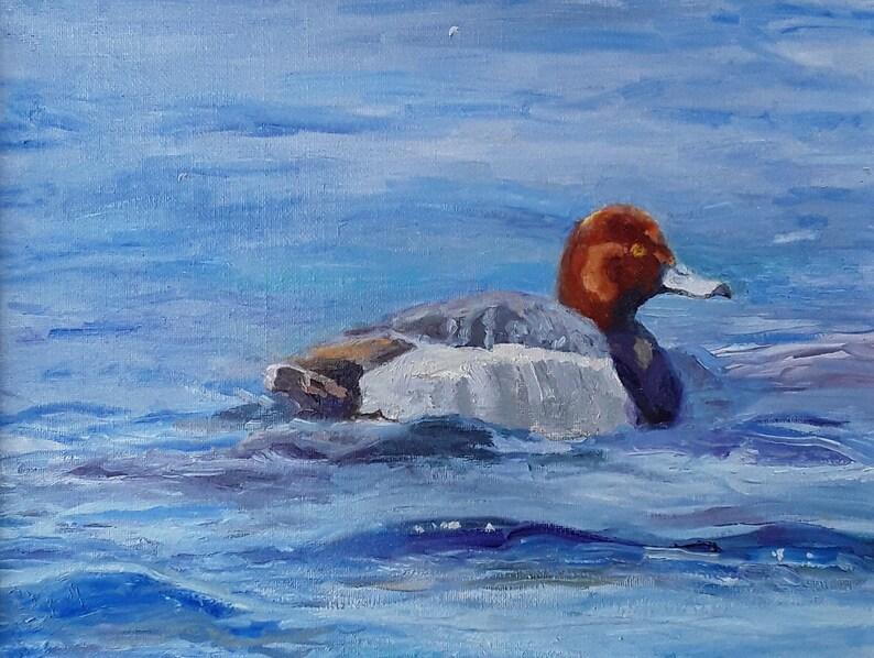Redhead Duck in Repose image 0
