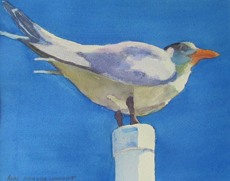 Seagull on a Post image 0