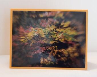 Sympathy_Golden Leaves2