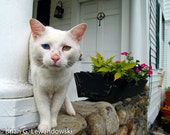 Two-Eyed Cat